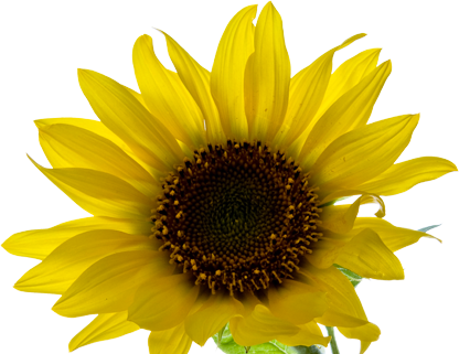 Aesthetic Yellowaesthetic Tumblr Flower Tumblrflower