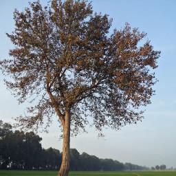december beautiful nature bliss blissful freetoedit