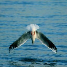 beach bird nature