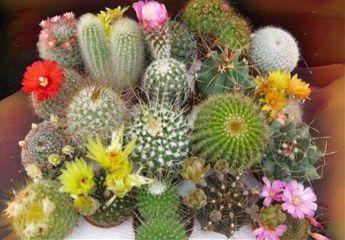 freetoedit cacti
