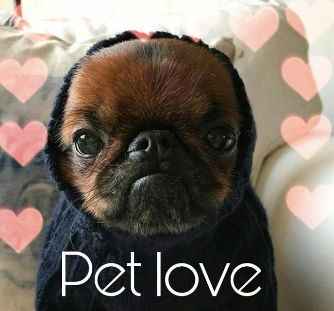 #FreeToEdit  #petlove  #petcity #perfect  #pet  #lovely   #pettime