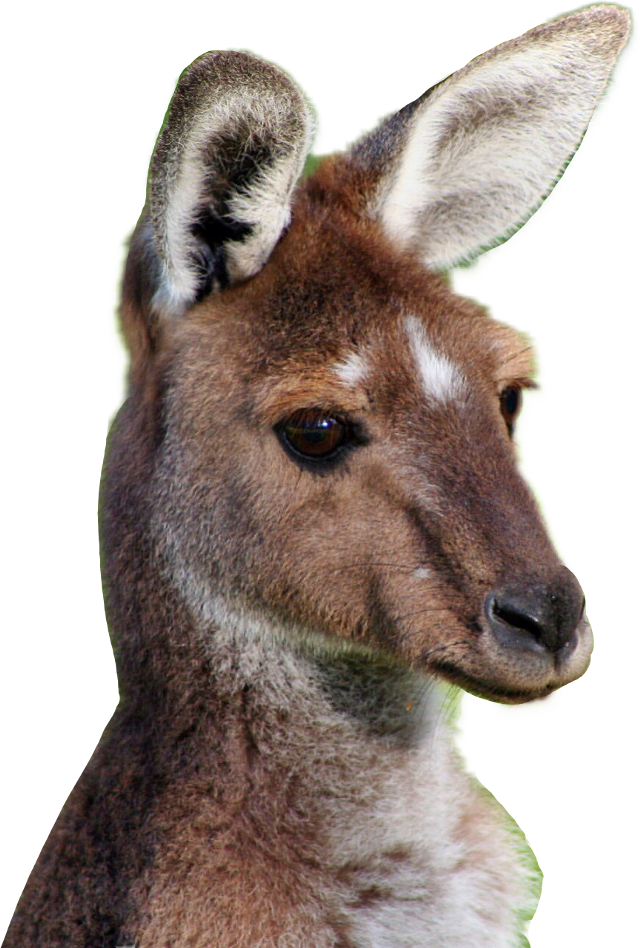 #freetoedit #kangaroo #ftestickers
