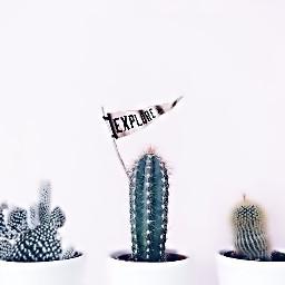 cactusremix freetoedit plant cactus