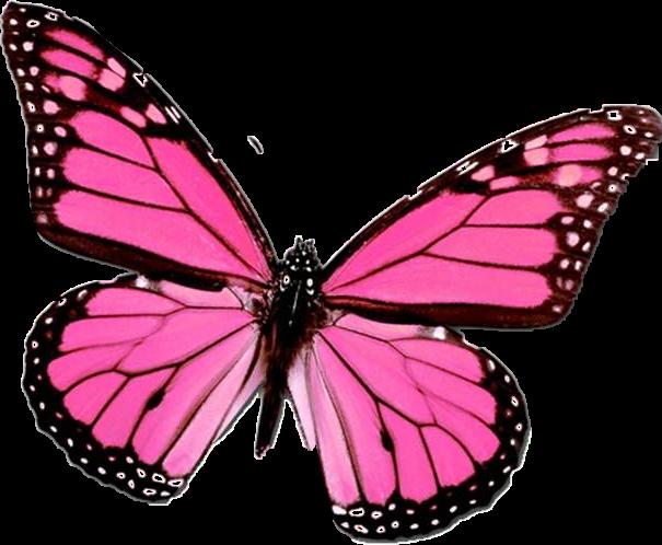 #butterflies #FreeToEdit