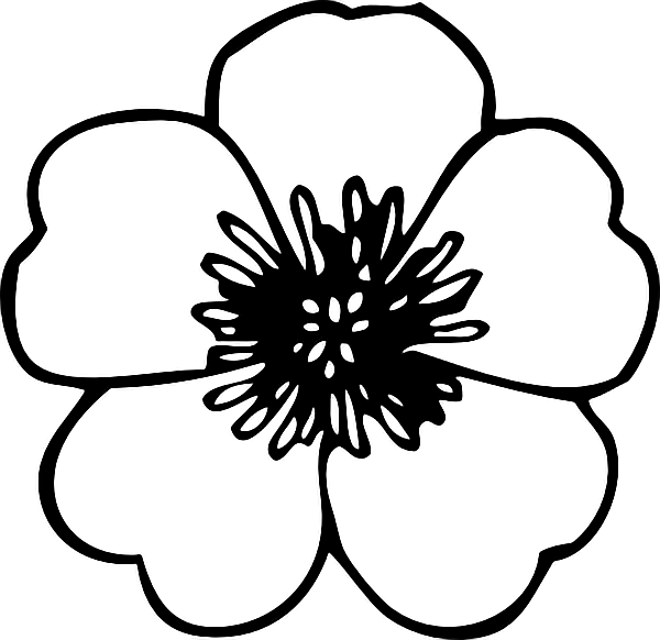 #ftestickers #white #flowers#FreeToEdit