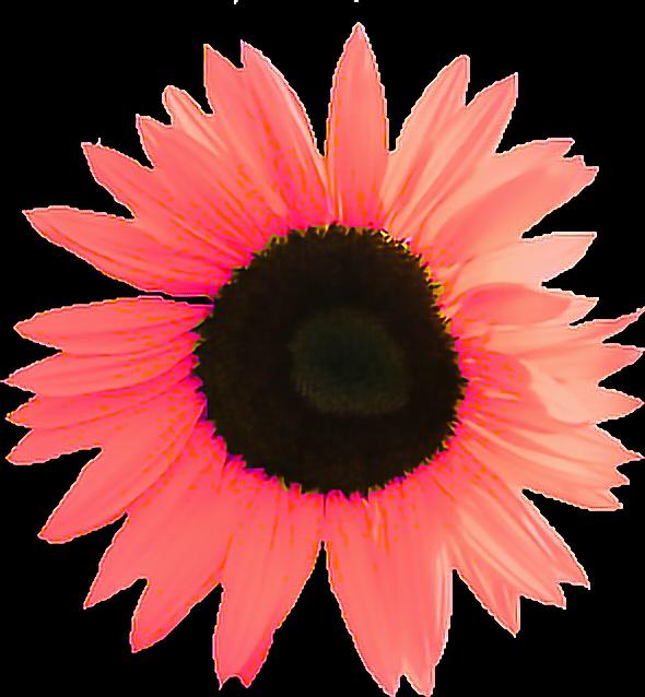 #flor #pink
