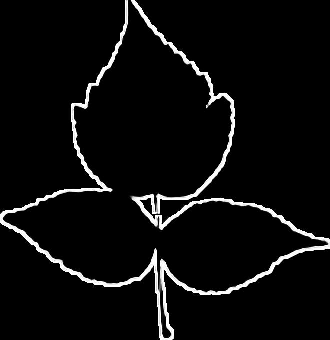 #leafe #sticker