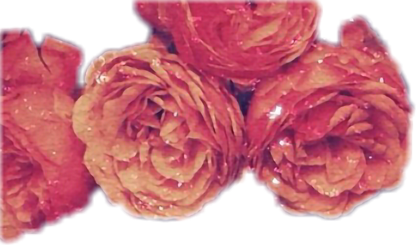 #rose #flower #pink