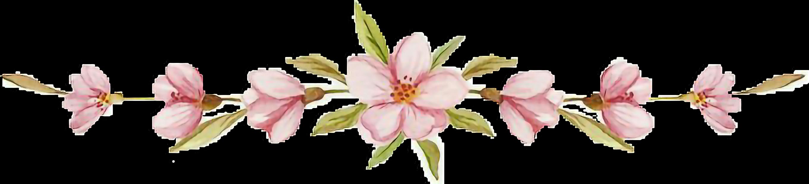 #pink #cherryblossom #flowerslovers #flower