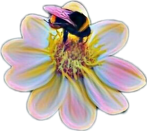 #hummel #remixit #flower#flower