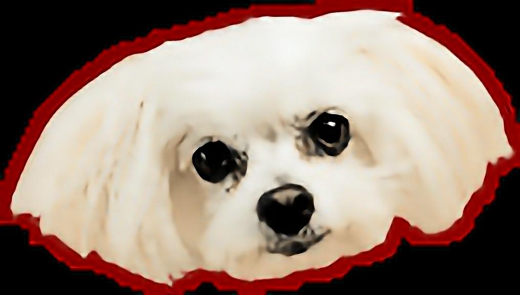 Dog Dogface Doghead Meme Funny Dogsticker Cute