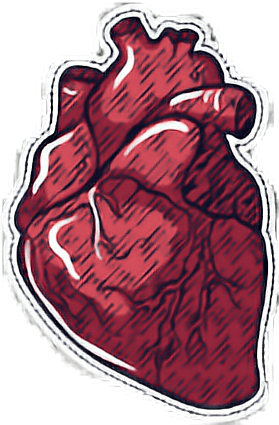 #сердце #анатомическоесердце #настоящее