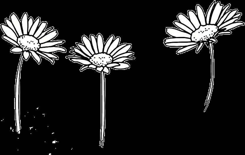 Flor Flores Blancas White Tumblr Tres Three Decoracion