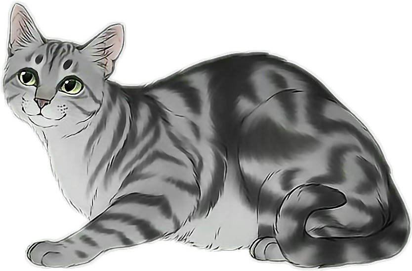 #котик